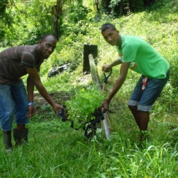 Disaster Relief – tree planting